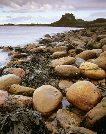 Close-up view of stones and seaweed at the foot of the rocky causeway of Lindisfarne Castle