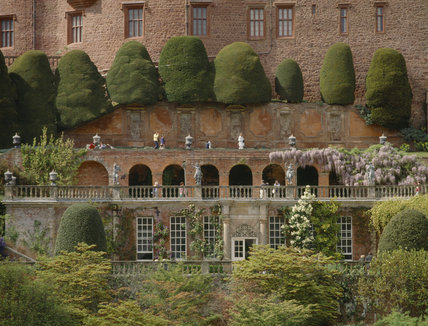 Wisteria growing on the terraces at Powis with topiary and statues