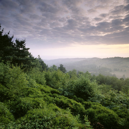 A hilly part of Hindhead Common at dawn, taken from above, showing wooded hills on either side of a misty valley with broken cloud