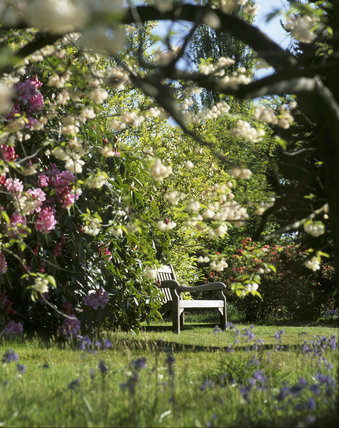 A view through blossoming tree branches to a wooden bench at Emmetts Garden in the Springtime