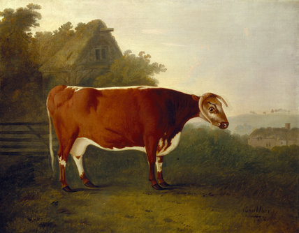 A painting of THE BROKEN HORNED BEAUTY by John Boultbee (1735- 1812)