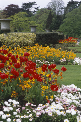 Formal beds in spring, in the garden at Tyntesfield, North Somerset