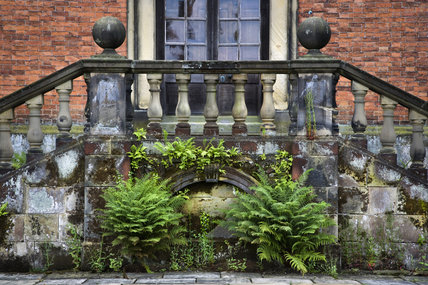 Ferns growing from below the balustraded steps at Dunham Massey, Cheshire