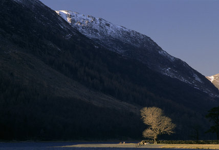 Sunlit tree at the edge of Buttermere, Cumbria, with dark steeply sided fells behind