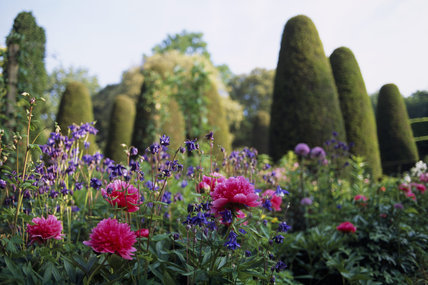 View of the Pillar Garden at Hidcote Manor, with Paeonia, peony and Aquilegia, Columbine in the foreground