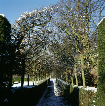 The hornbeam arch running alongside the Cherry garden at Ham House, in winter, Snow tops the trees and hedges on this beautiful bright day