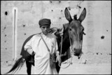 Boy with a mule