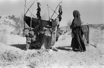Saar nomad with a camel-litter