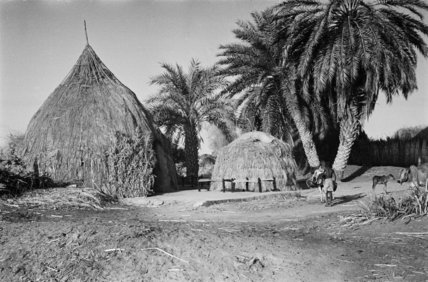 Huts and palm trees at ...