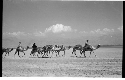 View of people riding camels ...