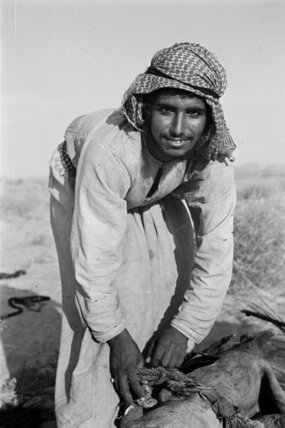 Portrait of an Bedouin falconer ...