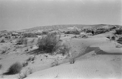 View of ghada trees in ...