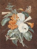 Nasturtium and white convolvulus, by Isaac Johnson