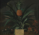 Pineapple grown in Sir Matthew Decker's garden