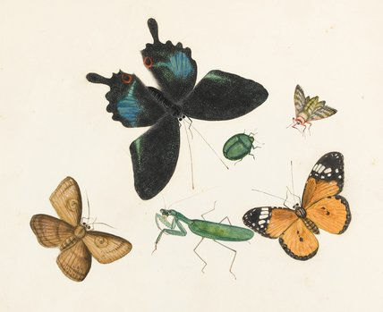 Butterflies, moths, grasshopper and a beetle, Chinese