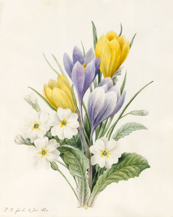 White Primroses and Early Hybrid Crocuses, by Louise d'Orleans