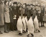 Children and King Penguins