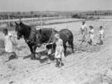 Jean Harwell (left) and Alice Norman lead horses 'Daisy' and 'Captain' as they harrow a field at Ashwell Merchant Taylors School near Baldock in Hertfordshire, 1942.