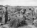 Members of the Women's Army Auxiliary Corps tending British war graves at Abbeville, 15 September 1917.