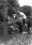 A member of the Women's Land Army rests her team of work horses by a river during the First World War.