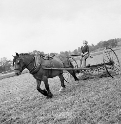 New recruit to the Women's Land Army, Iris Joyce, learns to drive the horse-drawn hay rake as part of her training at the Northampton Institute of Agriculture near Moulton in 1942.