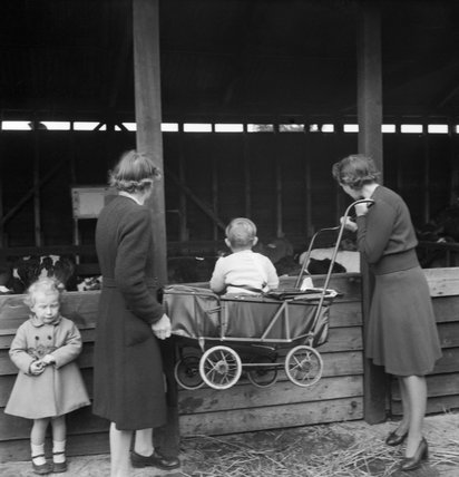 Two women lift up a pram so a young child can see calves at Sevenoaks cattle market in Kent, 1944.