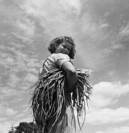 A student of the horticultural school for women at Waterperry House in Oxfordshire carrying onion plants, 1943.