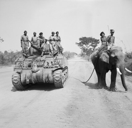 A Sherman tank of the 9th Royal Deccan Horse encounters a newly liberated elephant on the road to Meiktila in Burma, 29 March 1945.