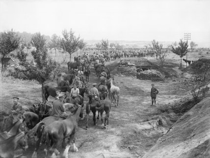 Horses of the Field Artillery going to water; Albert-Fricourt road, Somme, September 1916.