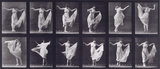 Dancing (fancy); from 'Animal Locomotion. An Electro-Photographic Investigation of Consecutive Phases of Animal Movement 1872-1885'