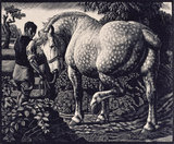 The Percheron
