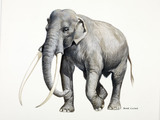 A reconstruction drawing of a Palaeolithic straight tusked elephant