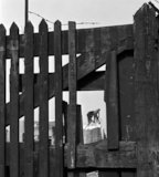 Two demotition men viewed through gate. c.1955