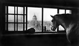 Multi-storey horse stables near Southwark Bridge: 20th century
