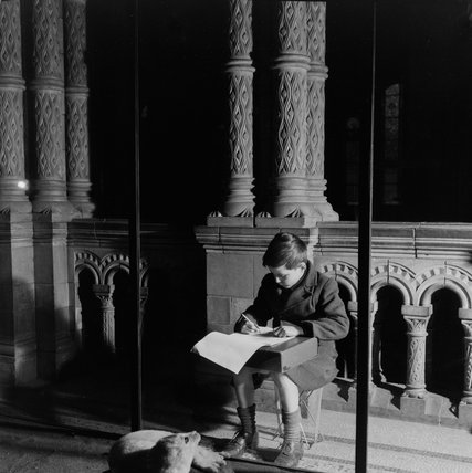 Child sketching in the Natural History Museum Galleries: 1954