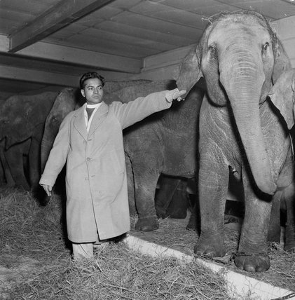 Elephant and trainer at Tom Arnold's Circus, 1951