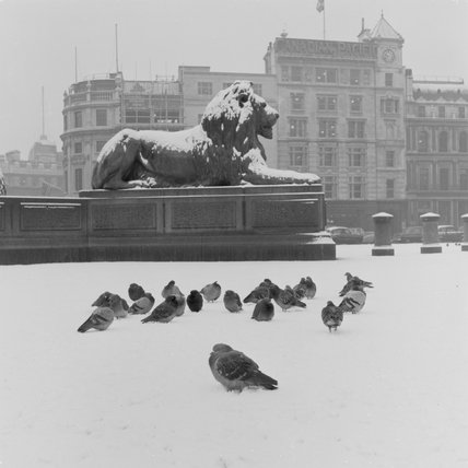 Lion statue and Pigeons in Trafalgar Square; 1957