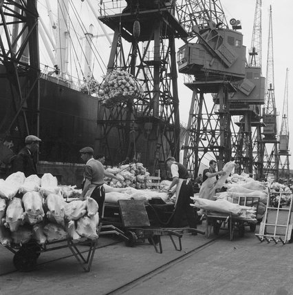New Zealand lamb is unloaded at the Royal Albert Docks: 1959