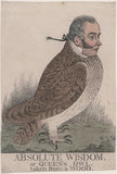 'Absolute wisdom, or Queen's owl. Taken from a wood' (Sir Matthew Wood, 1st Bt)