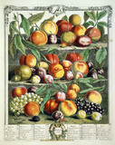 August, The Twelve Months of Fruits