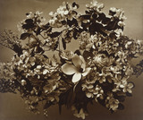 Wreath of Flowers, by Adolphe Braun & Co