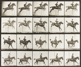 A horse jumping a fence, by Eadweard Muybridge