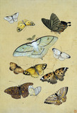 Butterflies. Japan, 19th century