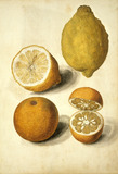 Oranges and Lemons, by Jacques Le Moyne de Morgues