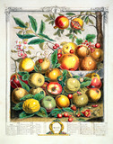May, The Twelve Months of Fruits