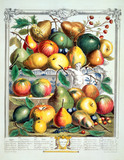 January, The Twelve Months of Fruits