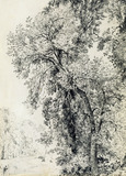 Study of Ash Trees, by John Constable