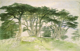 Cedars of Lebanon, by Edward Lear