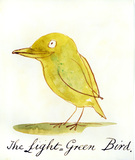 The Light Green Bird, by Edward Lear