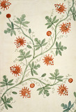 Silk design, by Anna Maria Garthwaite